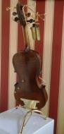 Violina lampa